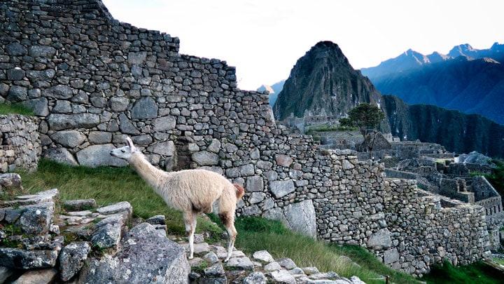 Machu-Picchu-lama-tas-duvar