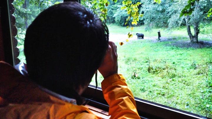 bear-watching-zargeşti