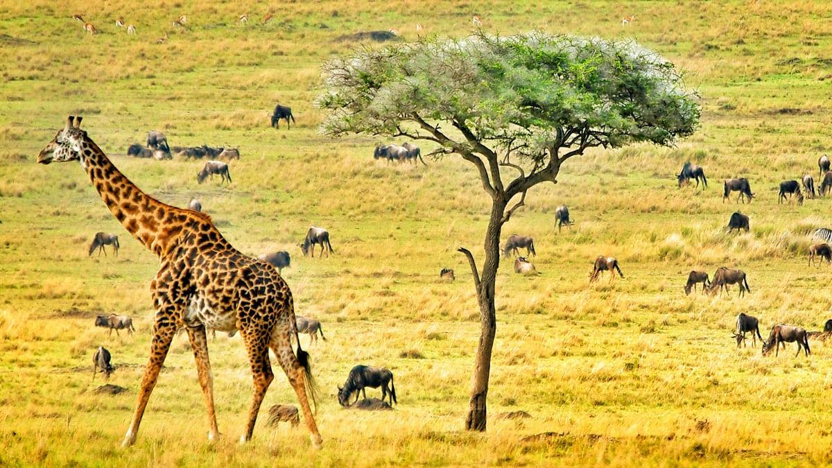 botswana-kapak-foto