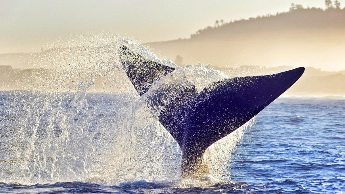 guney-afrika-vizesiz-balina