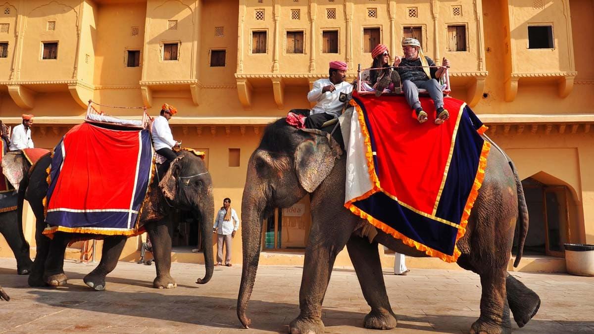 Hindistan'da inek neden kutsal bir hayvandır 3