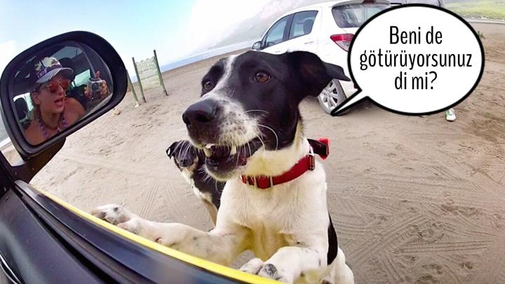 köpekle-gezmek-beni-de-götür