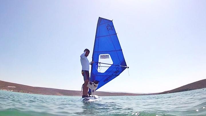 köpekle-gezmek-surf