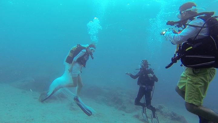 scuba-bride-su-altı-gelin-tüplü-dalış